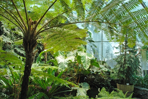 The Fernery in Edvard Anderson Conservatory