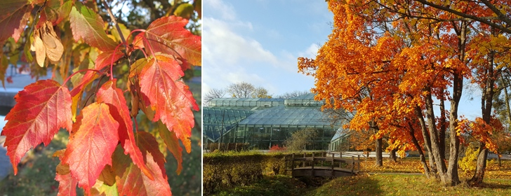 Autumn in the Bergius Botanic Garden