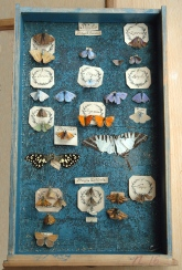 Picture of a drawer of specimens from Clerck's collection